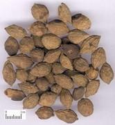 Alpinia Oxyphylla Fruit