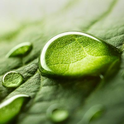 Plantes & Pharmacopée