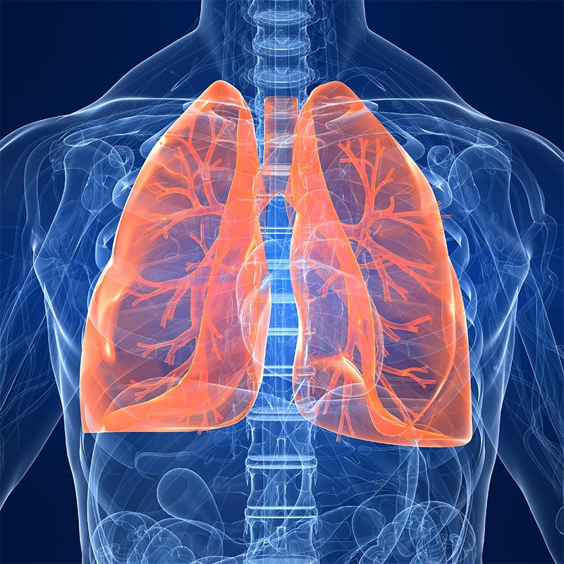 Le Poumon
